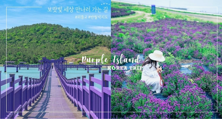 好想住在這!韓國超美秘境「紫色小島」太夢幻♡限定紫色花海、紫色大橋還有紫色公路怎麼拍都敲美~